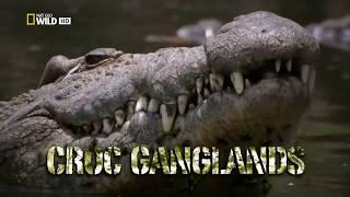 National Geographic Documentary II Struggle for existence II Wildlife Animal