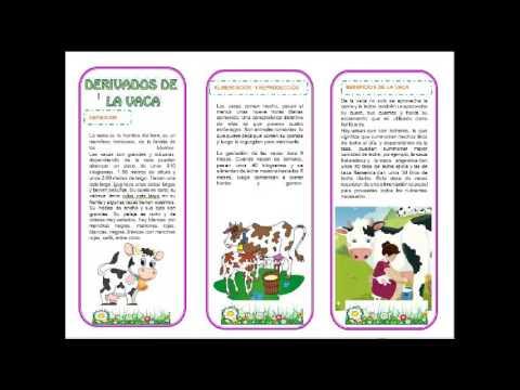 Triptico de los derivados de la vaca youtube - Como cocinar las setas lengua de vaca ...