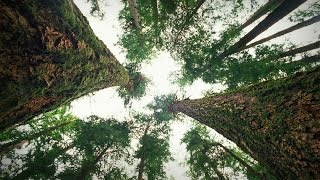 8. How trees talk to each other | Suzanne Simard