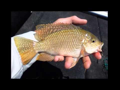 Fishing Doorndraai Dam