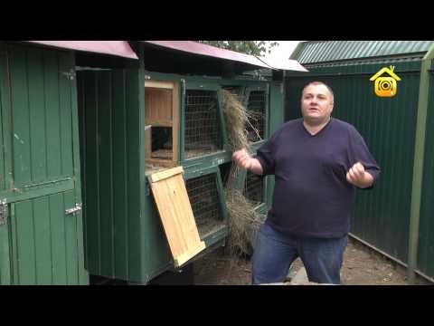 Как правильно держать кроликов