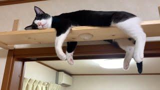産後、初めてモノレールになった母猫がかわいい   Cute mother cat who became the first monorail after giving birth.