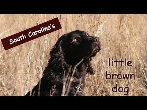 Little Brown Dog | Classically Carolina | Visit Camden