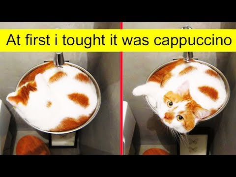 Cat Posts On Tumblr That Are Impossible Not To Laugh At 「 Funny Photos 」