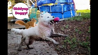 Try Not To Laugh | Husky | Practicing Hunting