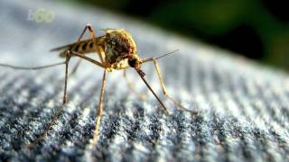 Unit 110 Scientists Can Wipe Out Deadly Mosquitoes with Common Bacteria
