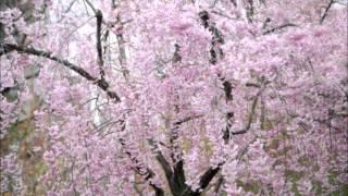 花かげ(童謡唱歌)