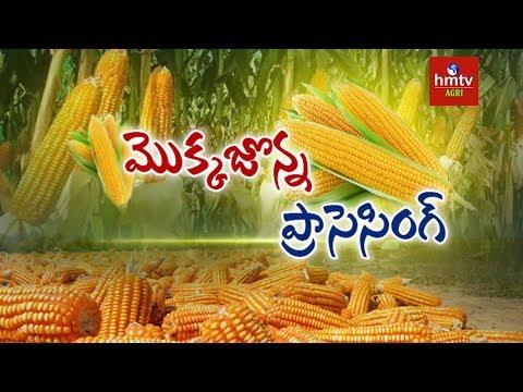Maize Processing Guide By Mynampati Sreenivasa Rao | Food Processing | hmtv Agri
