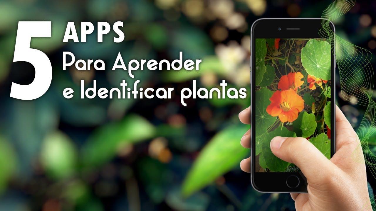 Top 5 apps para aprender e identificar plantas. #NatZone