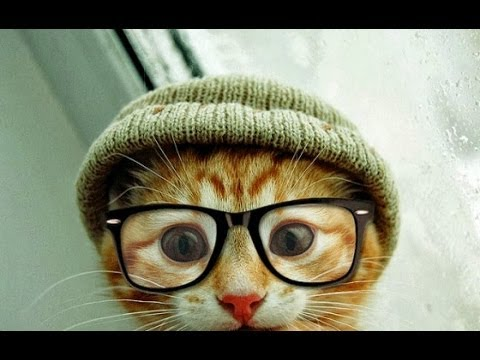 FUNNY VIDEOS: Funny Cats – Smart Funny Cats & Kittens – Funny Videos Compilation – Funny Kitty
