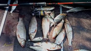 Рыбалка на спиннинг, ультролайт, на лесной микро речке, Ловля чебака, (плотвы), щуки, на блесну