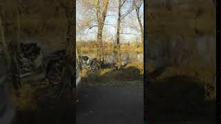 В дорожной аварии погиб Глава Абакана Николай Булакин