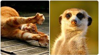 Смешные Животные 2016! Забавная Видео Подборка / Funny Animals Compilation 2016/