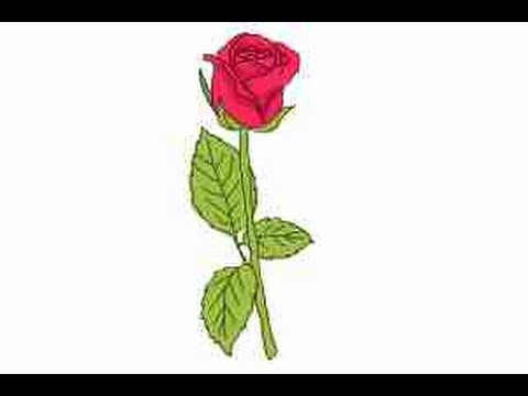 step by step how to draw a rose youtube