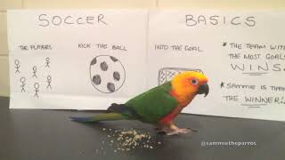 World Cup 2018 Round 1, Sammie the parrot's animal oracle predictions