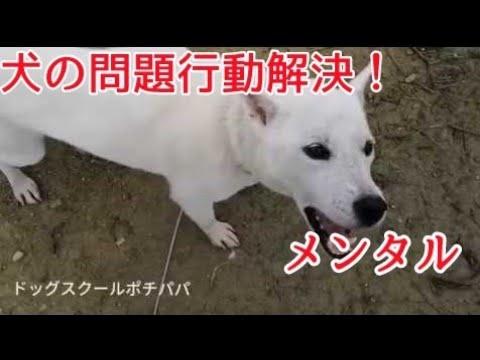 【犬の問題行動解決!】飼い主さんのメンタルです!