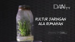 Video KULTUR JARINGAN ALA RUMAHAN - BUMIKU SATU DAAI TV download MP3, 3GP, MP4, WEBM, AVI, FLV September 2018