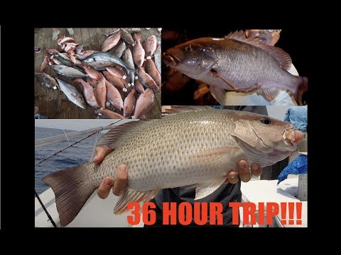 AWESOME 36 HOUR NIGHT TIME FISHING!!! | DEEP SEA FISHING FLORIDA