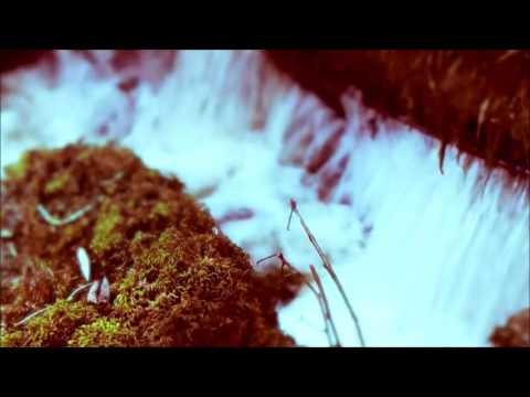 Leman Sam - Bir Rüya Gibi