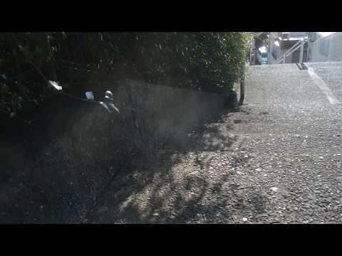 猫坂の野良猫たち18年3月4日2/3 坂を登る加藤虎之娘。