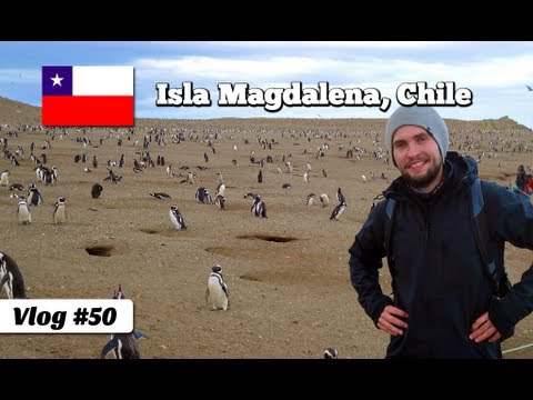 Walking with Penguins on Magdalena Island in Chile (Travel Video Blog 50)