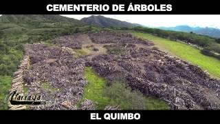 Cementerio de árboles de la represa El Quimbo