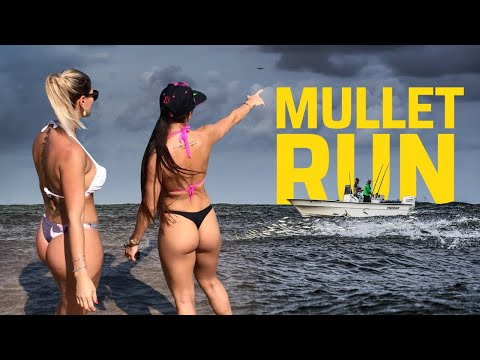 THE MULLET RUN   REEL REPORTS