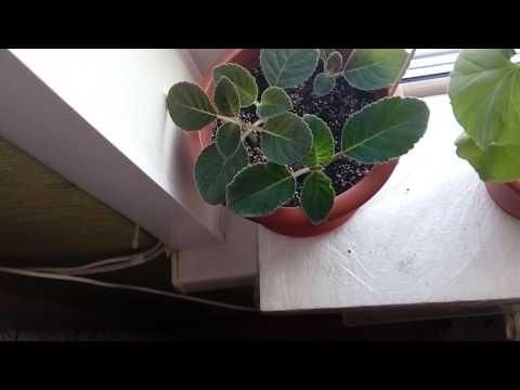 Как я проветриваю комнату, не открывая окно... Зимний мороз вреден для цветов((((