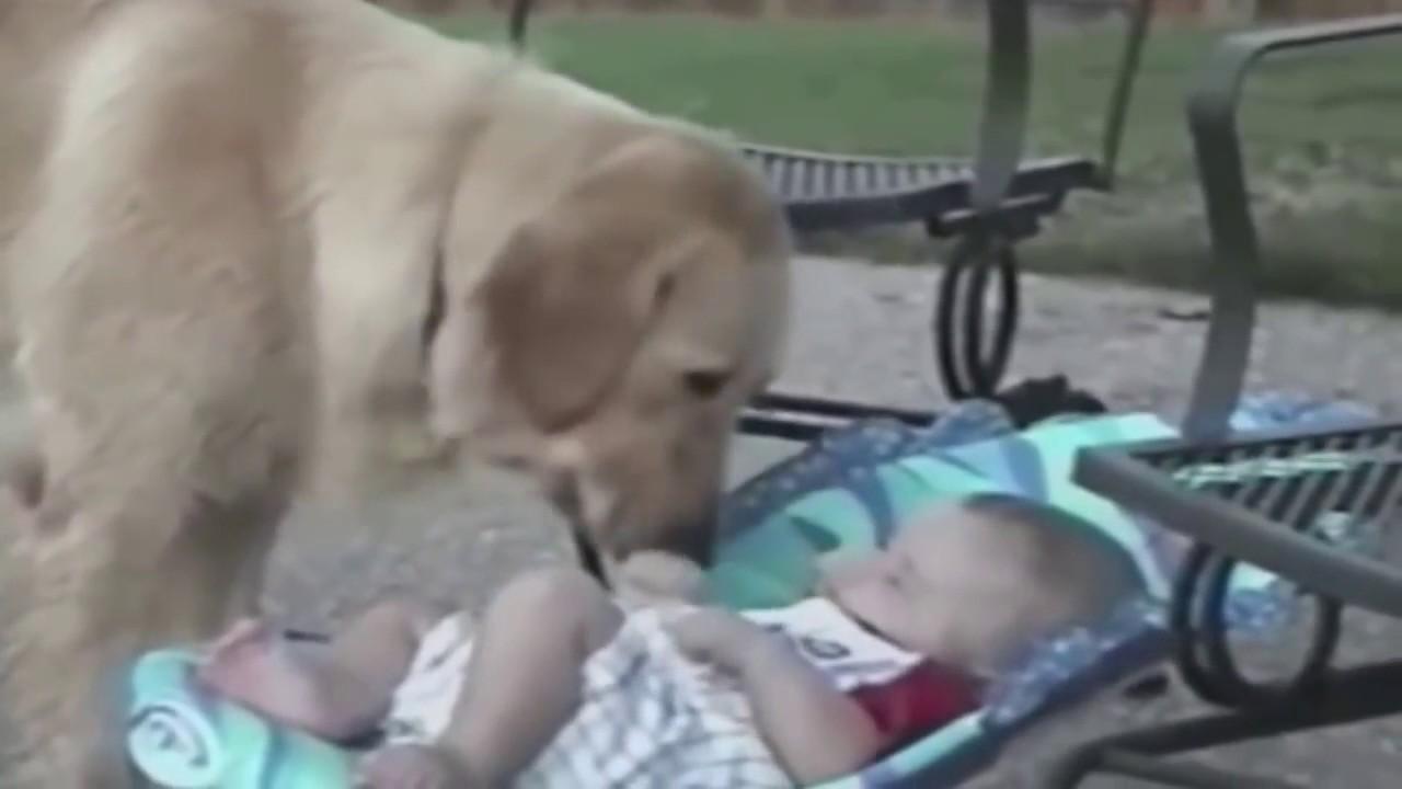 Прикольные животные видео смотреть онлайн до слез для детей, февраля открытки юмористические