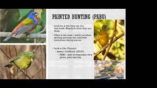 OPJV Grassland Bird ID pt1