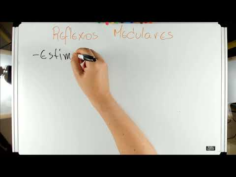 Reflexos Medulares - #01 Introdução - Neurofisiologia