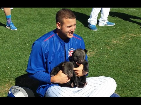 Watch the Chicago Cubs Play with the Cutest Actual Cubs