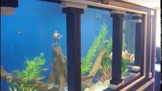 DIY 1150 gallon plywood aquarium Part 2