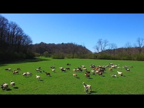 160 Acre Horse Farm For Sale In Ellijay Georgia