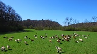 160 acre horse farm for sale in Ellijay Georgia - ELIZABETH YANCEY