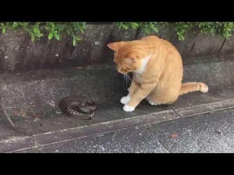 猫パンチ vs へび Part ①