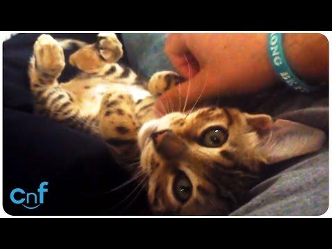 Kitten Talks   Cat Chat