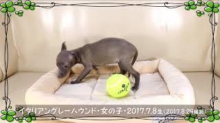 """""""性別 女の子 カラー ブルーフォーン 誕生日 2017年7月8日"""" この子のペ..."""