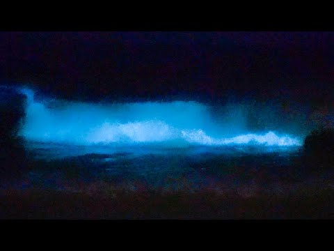 BIOLUMINESCENT WAVES - Newport Beach April 2020