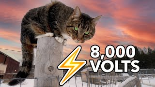 Why my Barn Cat can't get Shocked by the Electric Fence