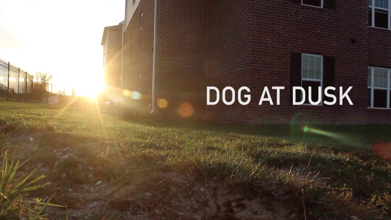 Dog at Dusk