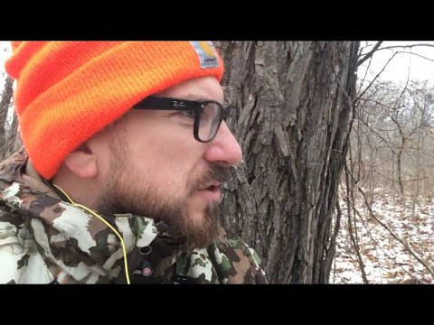 Winter Squirrel Hunting - Tips And Tricks
