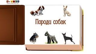 """Відео для дітей від 1 року Презентація """"Породи Собак"""" (2)"""
