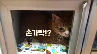 고양이가 진열되어 있습니다.