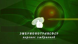 Перенос эмбрионов эмбриотрансфер
