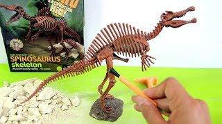 Dinosaur toy skeleton fossil excavation | Esqueleto de dinosaurio juguete para excavar | 玩具恐龍 - 1/7