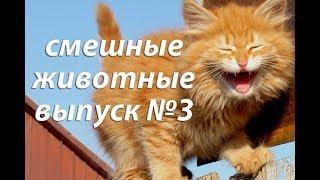 Смешные гифки. Смешные животные. Смешное видео. Выпуск №3