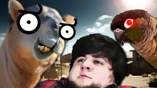 Jontron: Bird VS Camel