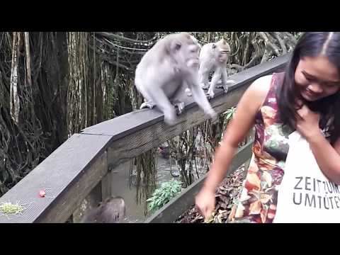 Very Naughty And Brilliant Monkeys : Watch Video from YouTube · Duration:  2 minutes 16 seconds