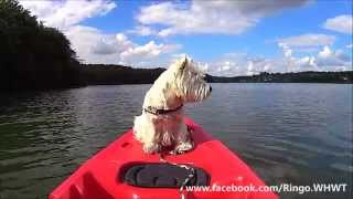 Westie Goes Kayaking